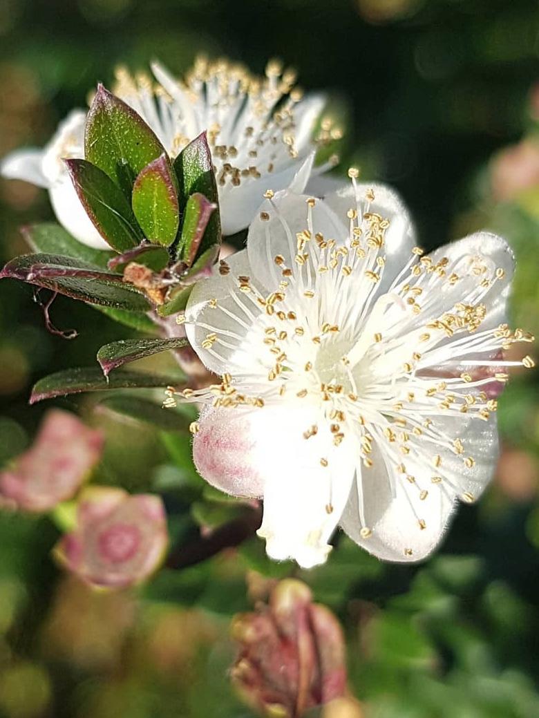 Main-Flower